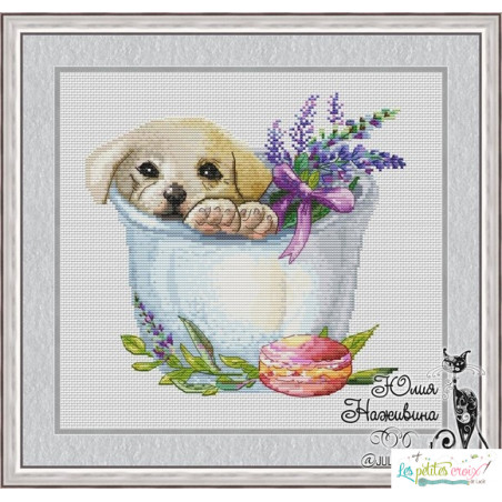 Puppy in the cup