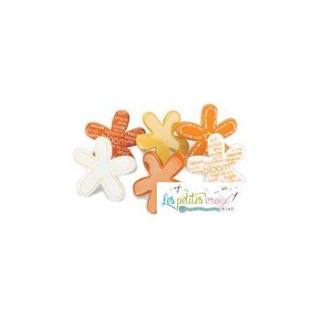 Fleurs oranges et blanches